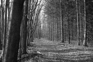stockvault-treed-in102671
