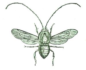 green-bee2