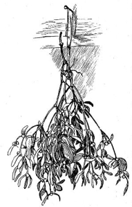 herbs-02