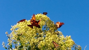 The visit of the Monarchs yesterday.