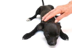 stockvault-puppy-dog119867