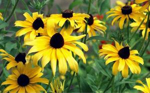 stockvault-yellow-daisies103566