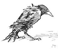 birds-26