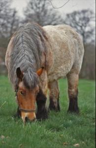 stockvault-horse115545