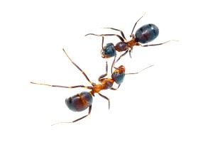 stockvault-ants136288