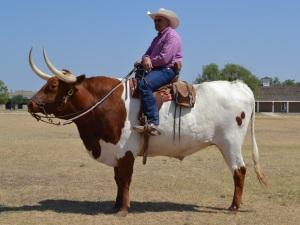stockvault-longhorn-bull-rider137933