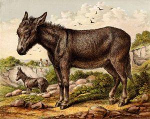 donkey-02