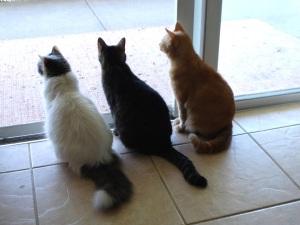 stockvault-we-three-cats99762