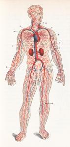 stockvault-human-blood-circulation-circa-1911148446