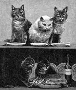 bw-cats-18