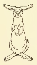 rabbits-19
