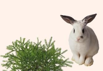 Rabbit and tree