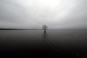 stockvault-lonely-tree-on-a-lake137519