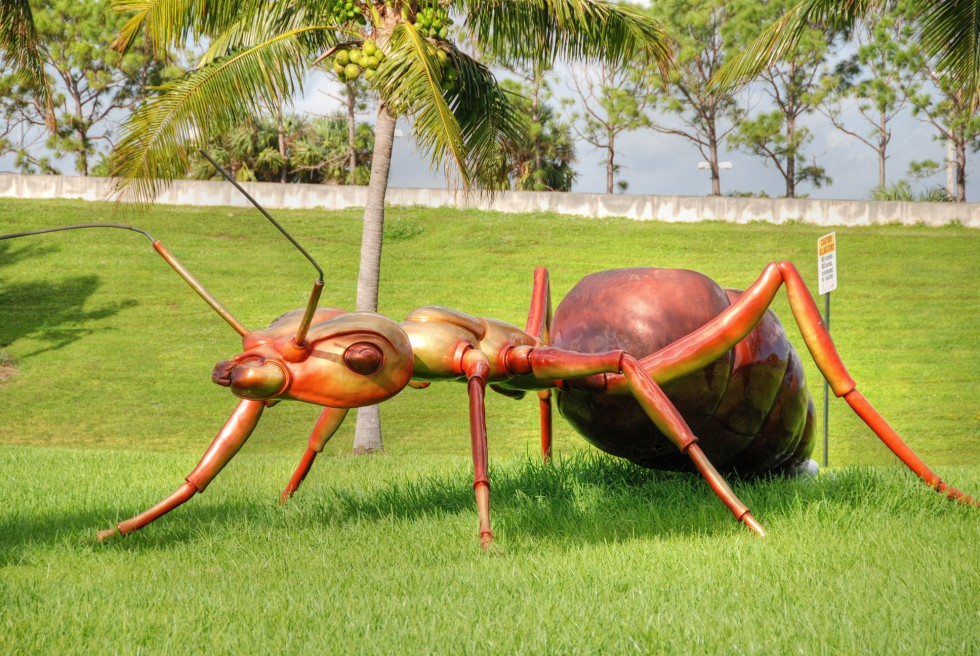 A giant ant near the airport of West Palm Beach