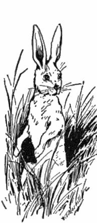 bunny-merrill