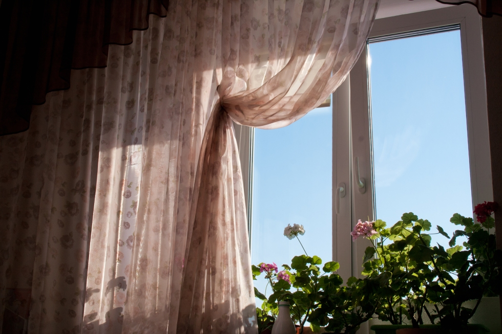 stockvault-flowers-at-the-window160443