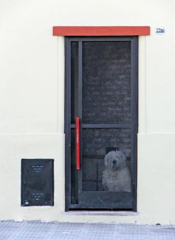 Closed Dog