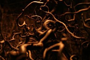stockvault-dark-roots99235