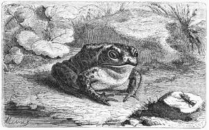 froggy-dinner