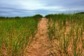 stockvault-beach-trail-hdr133693