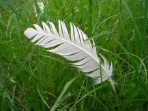 stockvault-feathergreen101357