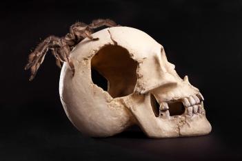 stockvault-spider-on-human-skull185423