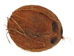 stockvault-coconut144636