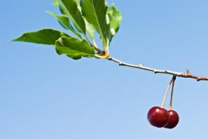 stockvault-cherries125732