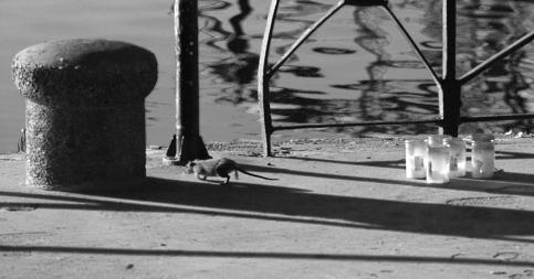 stockvault-harbor-rat189855