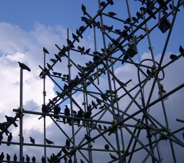 stockvault-birds138957
