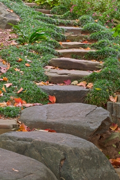 stockvault-arboretum-stepping-stones---hdr169999