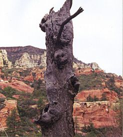 stockvault-old-tree-trunk101677