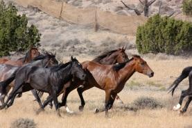 stockvault-feral-horses202850