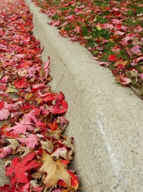stockvault-leaves-on-a-curb100353