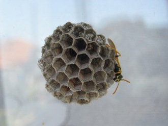 stockvault-wasp-on-a-nest138731
