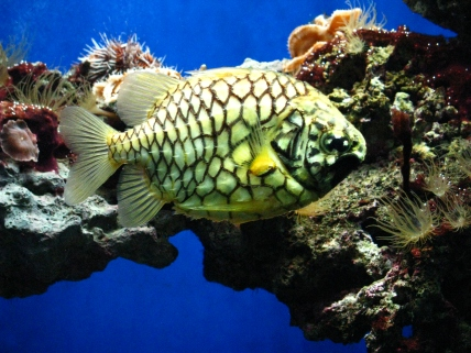stockvault-aquarium-in-oceanographic-museum-in-mont113045