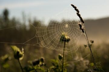 stockvault-cobweb103544