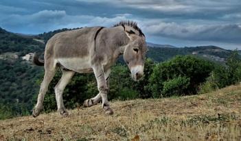 stockvault-mountain-donkey222836