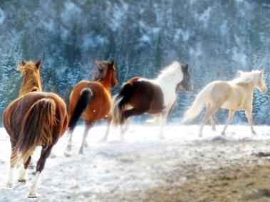 stockvault-running-horses153705