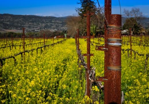 stockvault-napa-vineyard142662