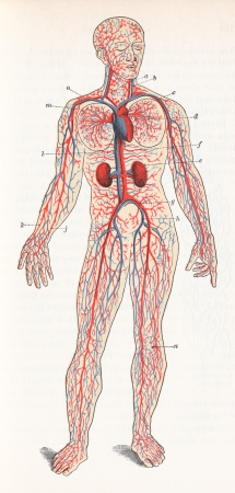 stockvault-human-blood-circulation-circa-1911148446
