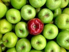 stockvault-red-apple151297
