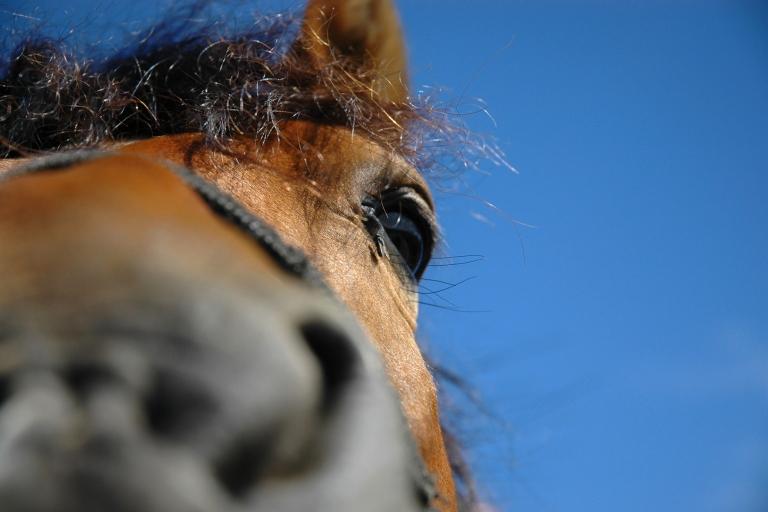 stockvault-horse101069