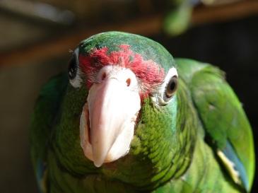 stockvault-parrot-upclose203228