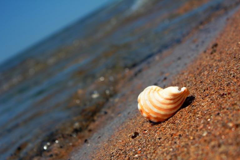stockvault-shell-on-the-beach140998