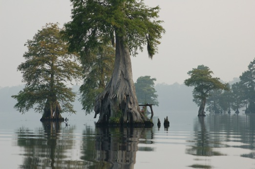 stockvault-great-dismal-swamp206928