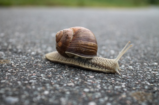 stockvault-closeup-of-snail-on-the-street214927