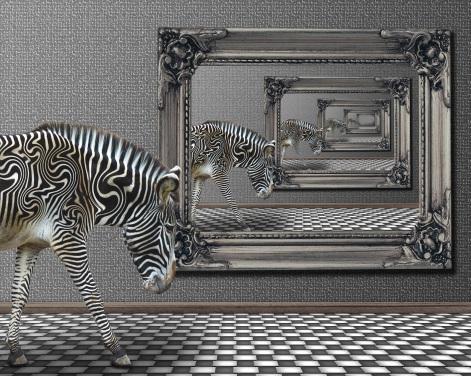 stockvault-zebra-reflection210525