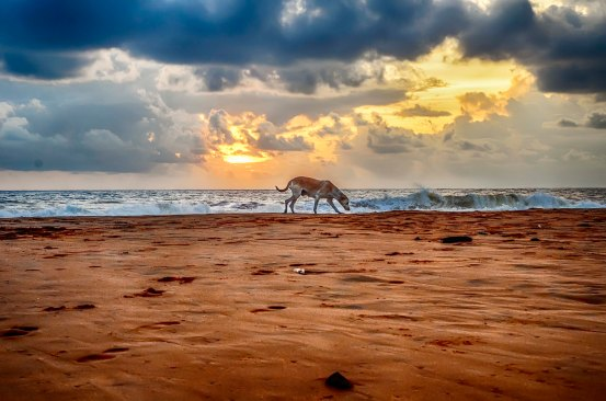 stockvault-a-cloudy-sunset-with-alone-dog148867