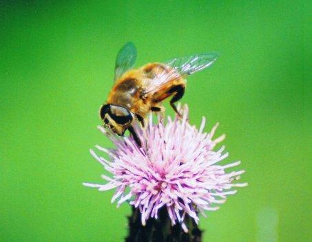 stockvault-bee101774
